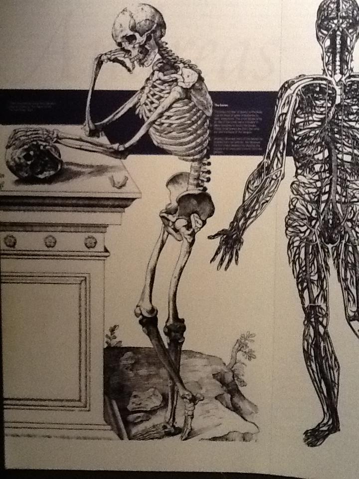 skeletons   skullsproject   page 3, Skeleton