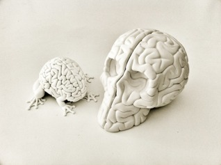 8_skull_brain_proto